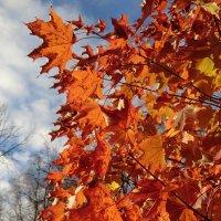 Листья в октябре... :: Владимир Павлов