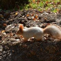 Проворная зверюшка живет в дупле-избушке. :: Anna Gornostayeva