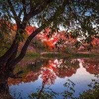 Осень. :: Евгений