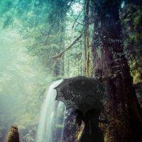 Готеса в лесу :: Сергей