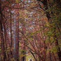 Осень в Сокольниках :: Ирина