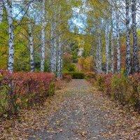 Дорога в осень :: Олег