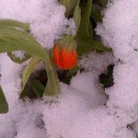 Пришла зима :: Елена *