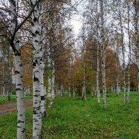Ранняя осень... :: Елена Байдакова