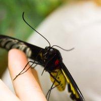 Бабочка :: Юлия Тулаева