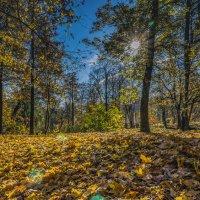 Осеннее яркое солнце золото листьев зажгло :: Valeriy Piterskiy