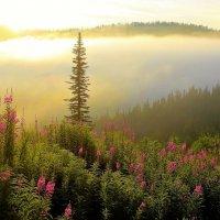 В солнечном тумане :: Сергей Чиняев