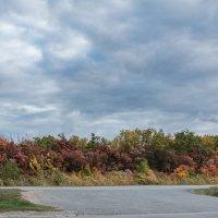 Яркие краски осени. :: Клаус