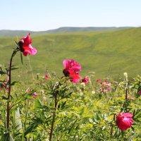 весна :: Свет Какоткина