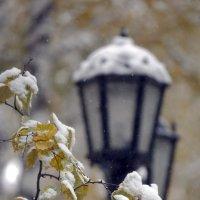 Первый снег :: Сергей Елесин
