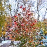 на границе с зимой :: Натали Акшинцева