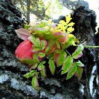 Осенние листья. :: nadyasilyuk Вознюк