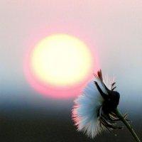 Надо солнышко почистить. :: nadyasilyuk Вознюк