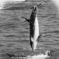 дельфин и женщина :: Елена Заичко