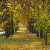 Аллея в осеннем парке :: Сергей Тагиров