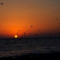 Закат в Гаграх :: Ирина Никифорова