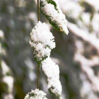 первый снег :: Олеся Зырянова