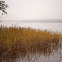 Осень в Монрепо. :: сергей лебедев