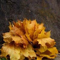 Осенний подарок :: Павел Зюзин