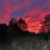 Розовый закат. :: Галина .