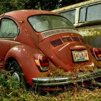Red beetle :: Arman S