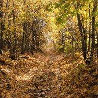 Осенний лес. :: Владимир Сквирский