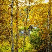 Домик в лесу! :: Ирина Антоновна
