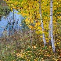Последние листья :: Валерий Шибаев