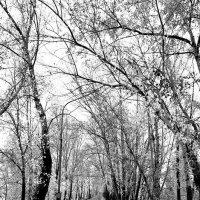 Идем со мной в тишину осени :: Екатерина Торганская