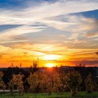 Молодые клёники золотом горят Озаряет издали осенний их закат... :: Анатолий Клепешнёв