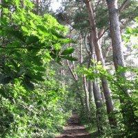 В лесу :: Volodya Grigoryan