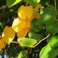 Ходит осень в нашем парке... :: Валентина ツ ღ✿ღ
