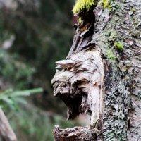 Хранитель леса. :: Андрей Скорняков