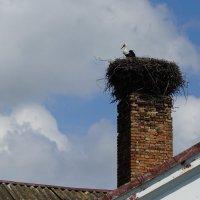 Аист на крыше, счастье под крышей... :: Ольга Чистякова