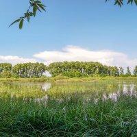 У озера :: Сергей Тарабара