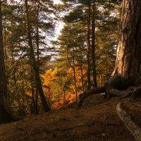 прогулка по осеннему лесу 2 :: Saloed Sidorov-Kassil
