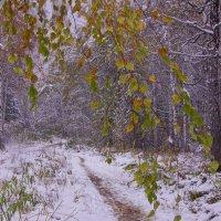 Первый снег---11 :: Владимир Холодный