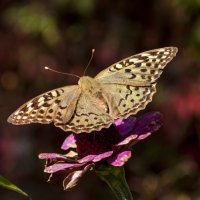 Бабочка :: Gmm12345