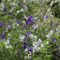 Цветы у дома :: Олег Афанасьевич Сергеев