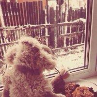 Первый снег :: Ольга Токмакова