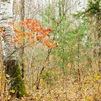 прощальные краски осени :: Tatyana Belova