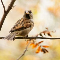 Птиц :: kolyeretka