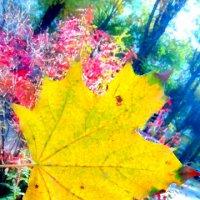 Желтые краски :: Вероника Озем