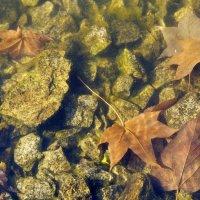 Осенний пруд :: Volkov Igor