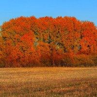 Красный остров средь полей :: Виктор Ковчин