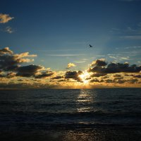 Буревестник на закате солнца :: valeriy khlopunov