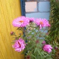 Цветы октября :: BoxerMak Mak