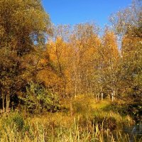 Осень на Яузе :: анна нестерова