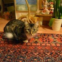 Мама-кошка :: Сербина Анна