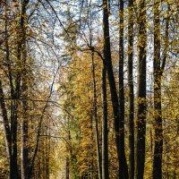 В осеннем парке :: Владимир Орлов